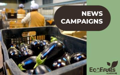 Comenzamos las campañas de calabacín, berenjena y tomate.